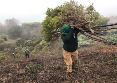 Tiburon Vegetation Removal