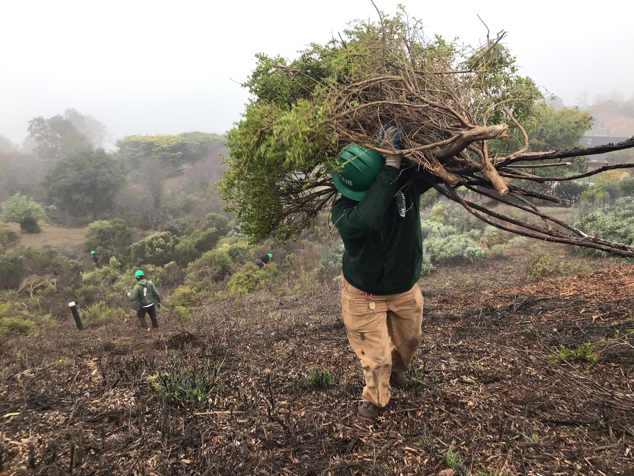 Tiburon Vegetation Removal