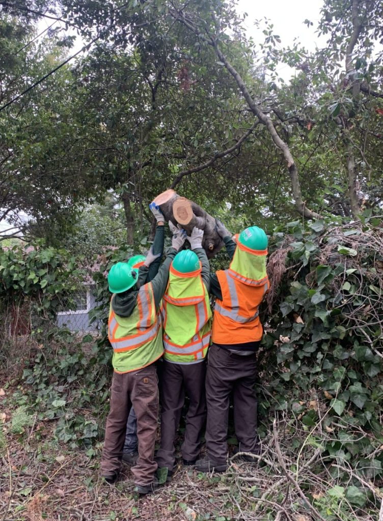 Teamwork to clear a large tree